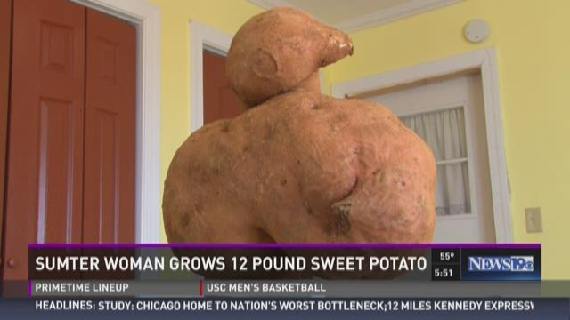 Sumter Woman Grows 12 Pound Sweet Potato